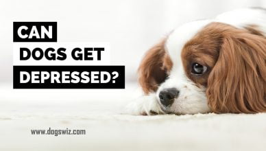 Can Dogs Get Depressed? Warning Signs and What to Do