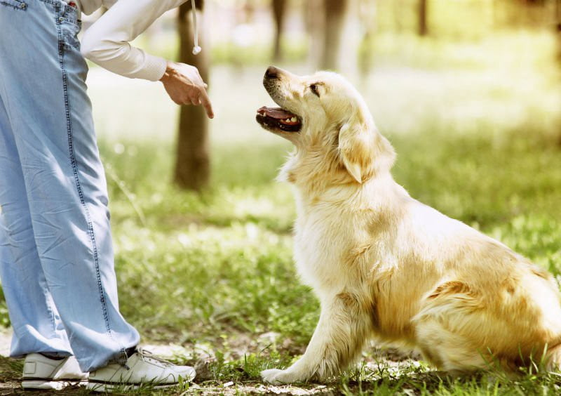 Can dogs talk - How do dogs talk/communicate with humans?
