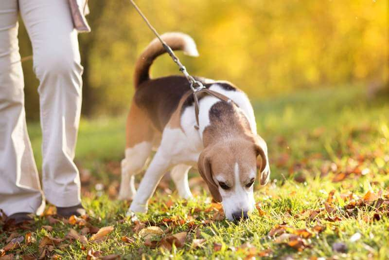 Encourage dogs to sniff and smell