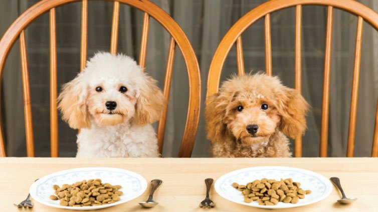 Can dogs eat quinoa