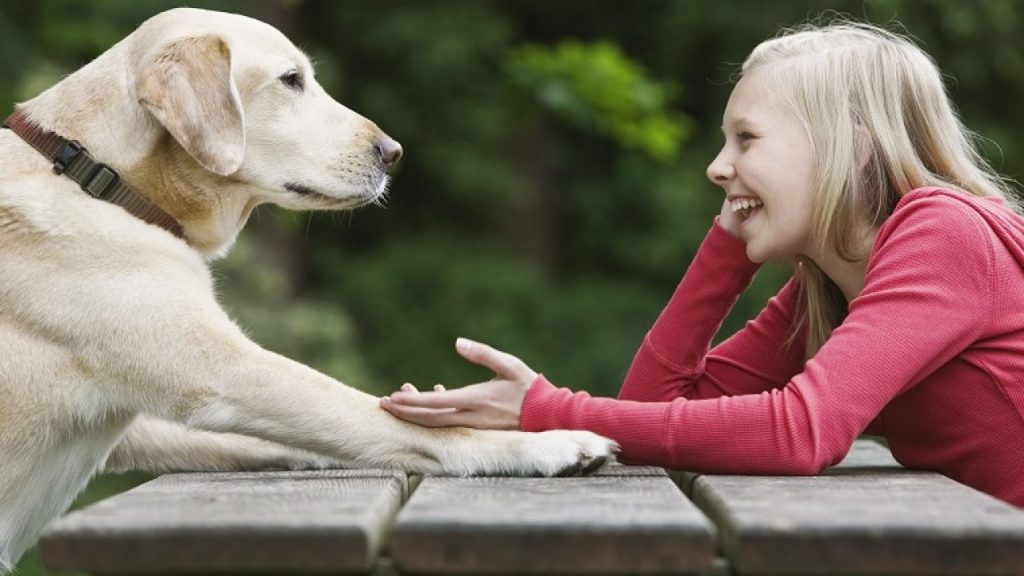 Can dogs talk - Can dogs understand humans?