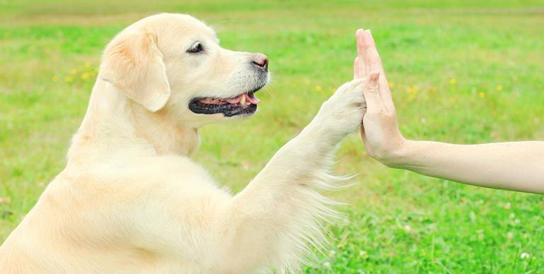 Can dogs talk?