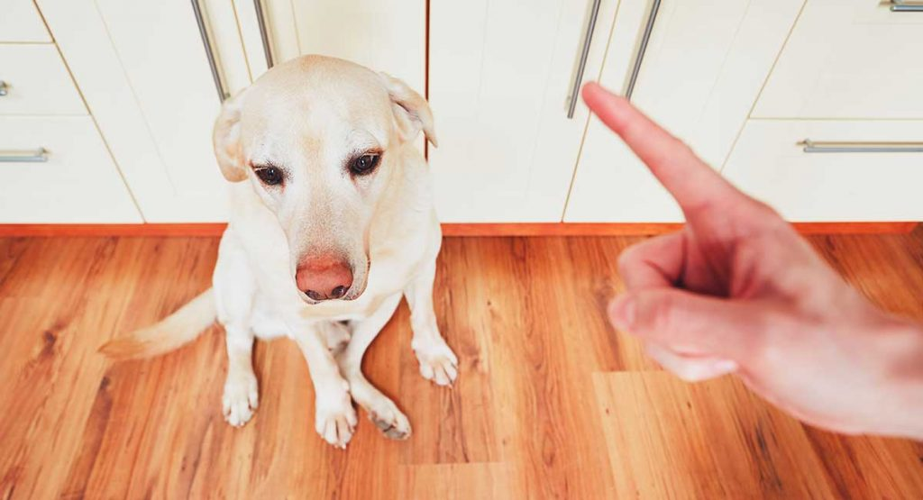 Teaching your dog the 'no' command