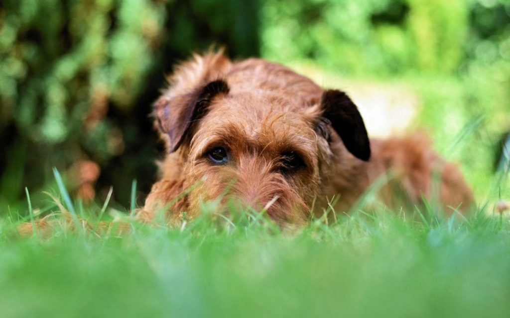 Keeping your grass dog friendly