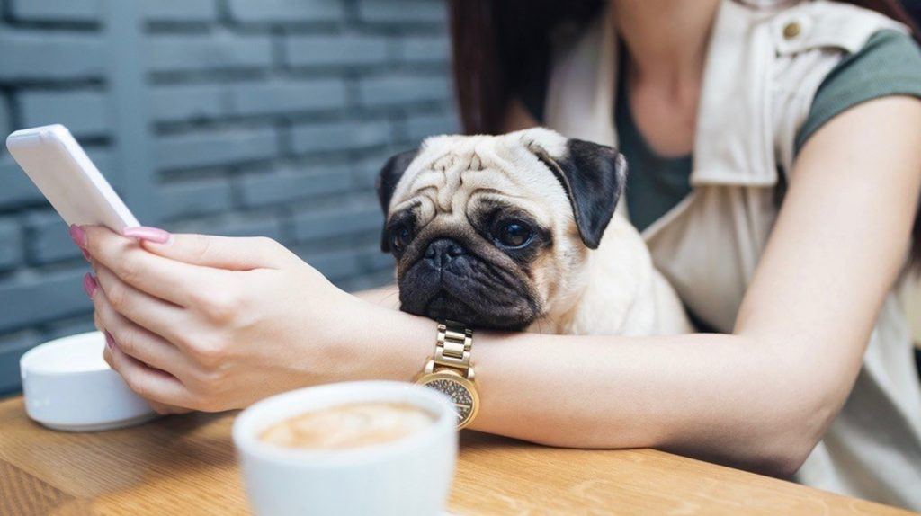 Can Dogs Drink Coffee? - Pug staring at a cup of coffee