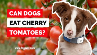 Can Dogs Eat Cherry Tomatoes